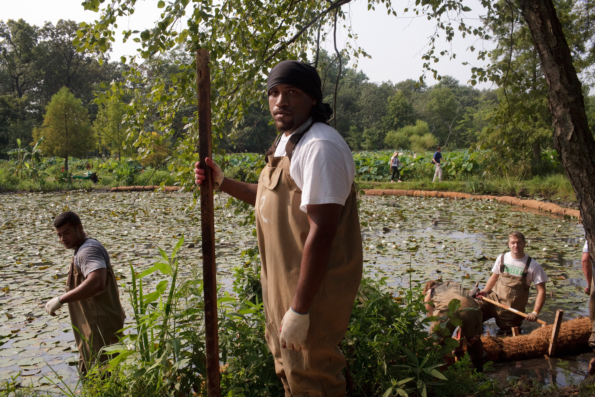 A community member helps clear invasive species from Kenilworth Aquatic Gardens on a workday sponsored by the Washington Nationals.