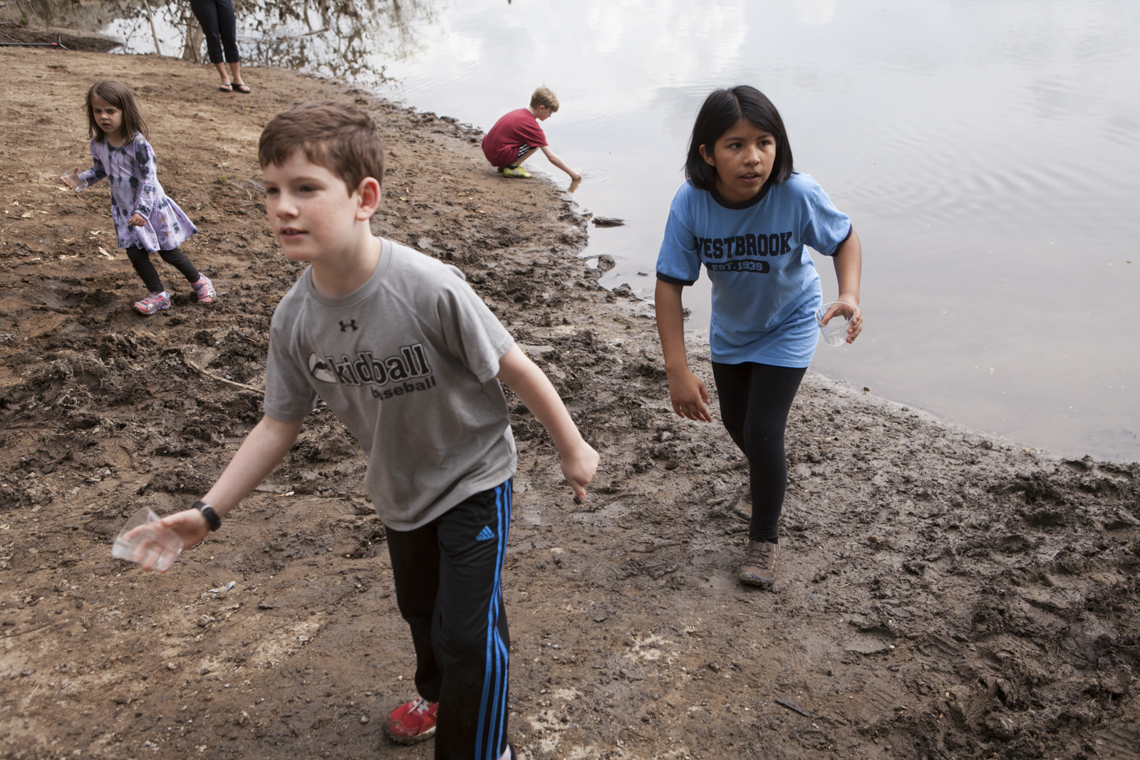 Students from Westbrook Elementary release American shad fry into the Potomac on a muddy day.