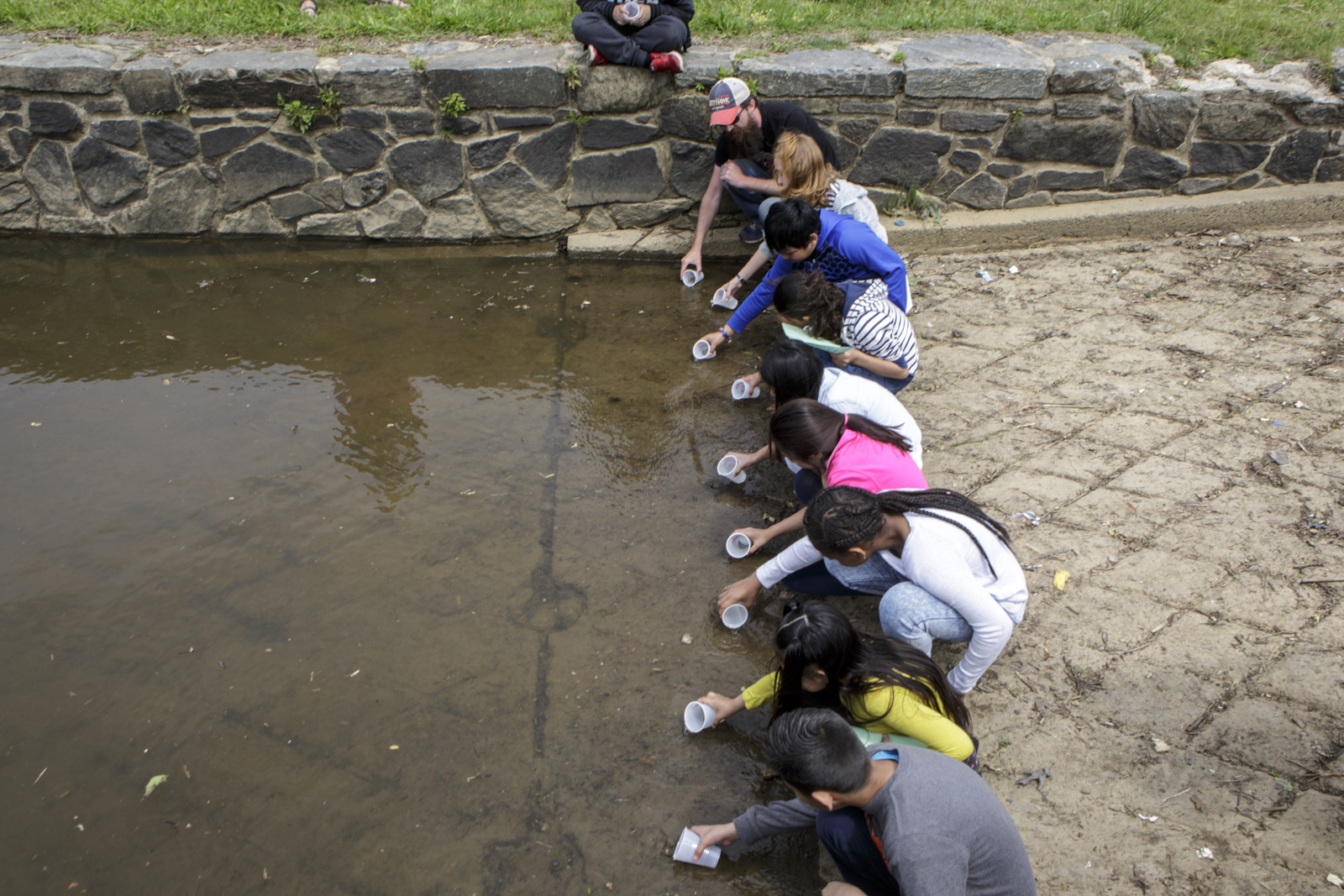 Students from Capitol City Public Charter school release American shad fry into the Anacostia. Though the Potomac river has been fully restored, the Anacostia is one of the rivers on the east coast where restoration work is still badly needed.