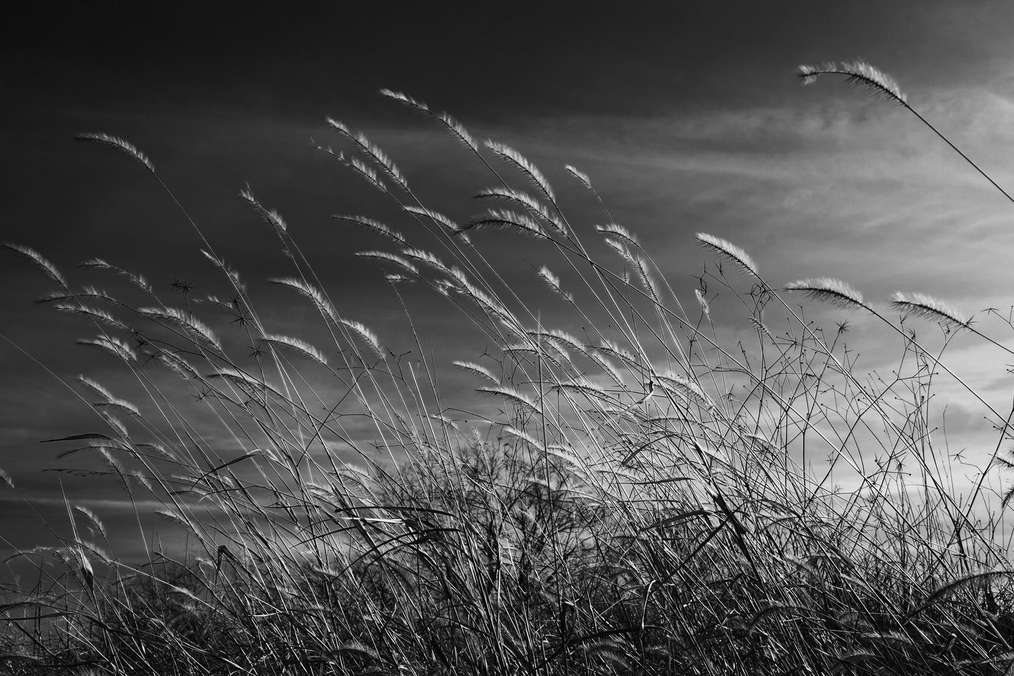 Winter Grasses Against a Dark Sky