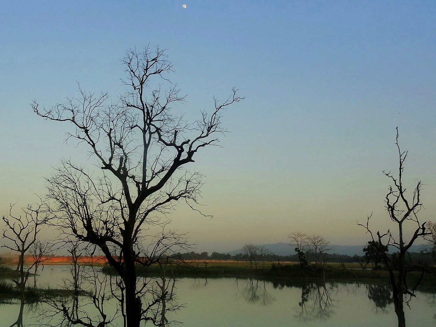 Trees wither along the shore of a coal-ash pond. (Wikimedia Commons/Ansh Mishra)