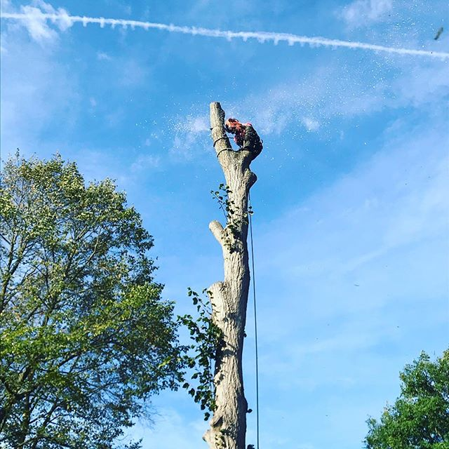 Clogging down a nice straight Lime stem. Forgot to get pictures before this point! #oldfieldtreeservices #chogging #arborist #treesurgeon #treesurgery