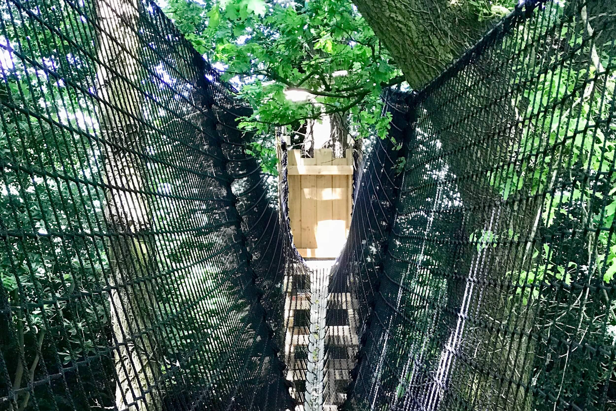 Tree-fort leading into Tree-top Walkway