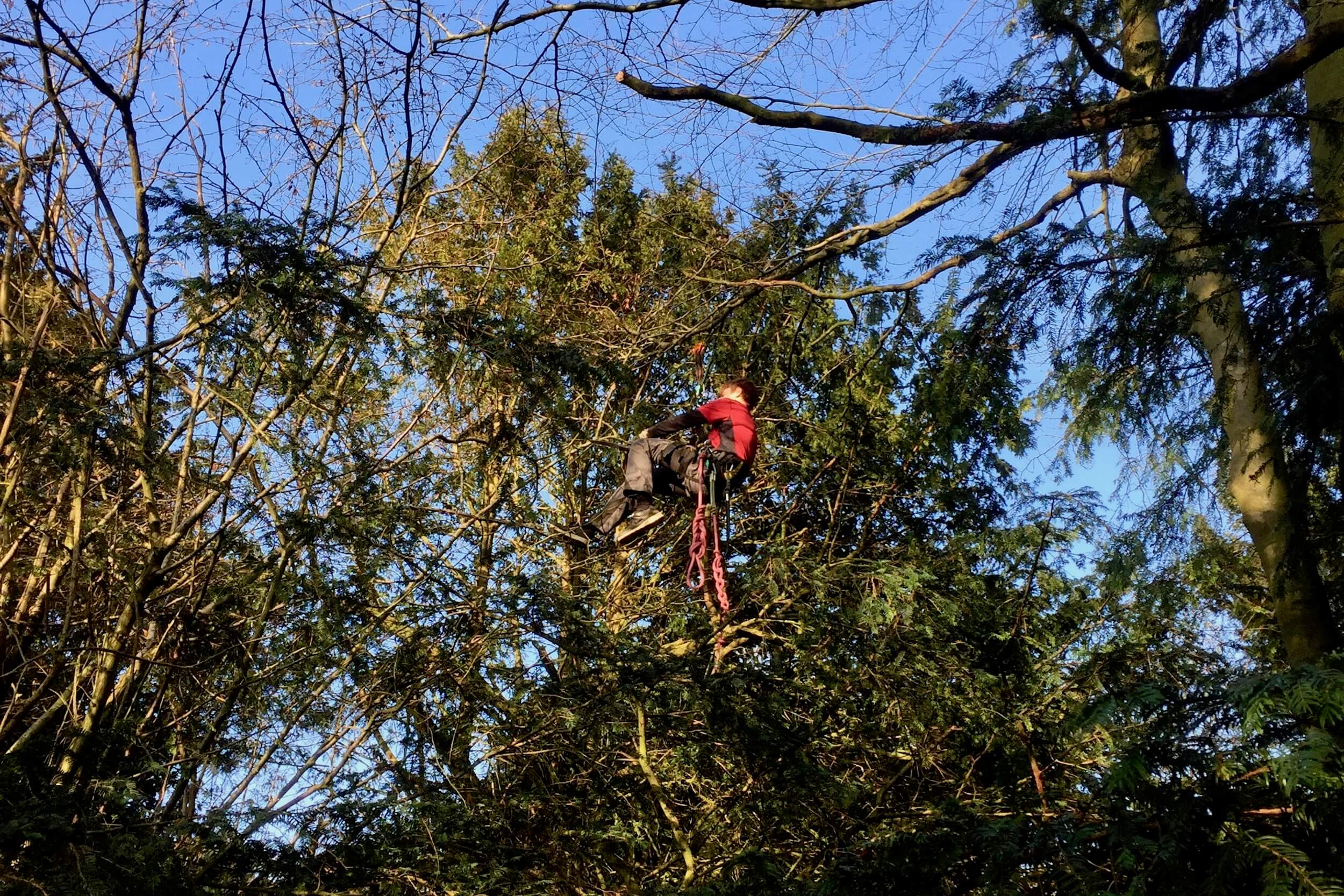 Tree Climber suspended