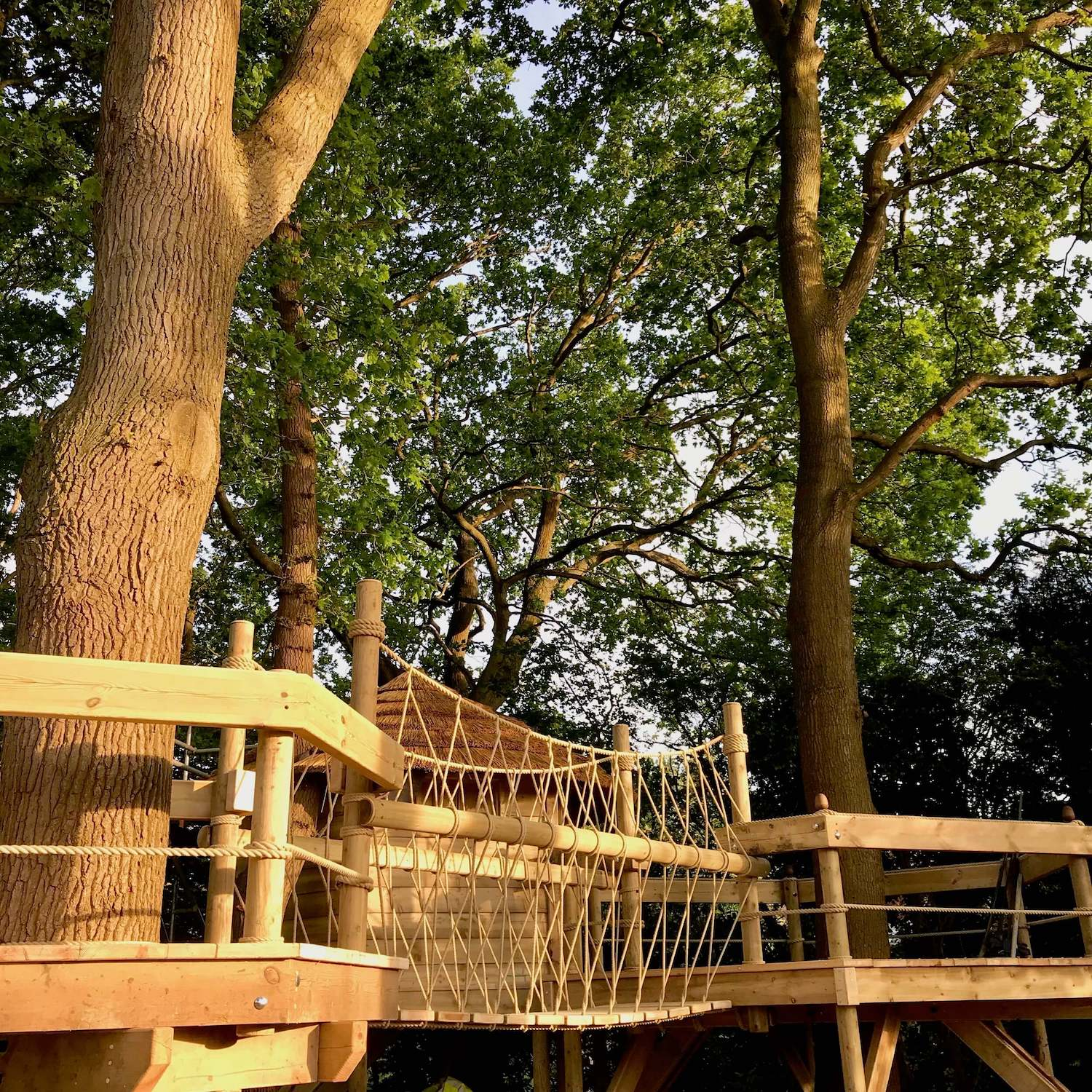 """""""...deck-to-deck rope bridge and treehouse"""""""