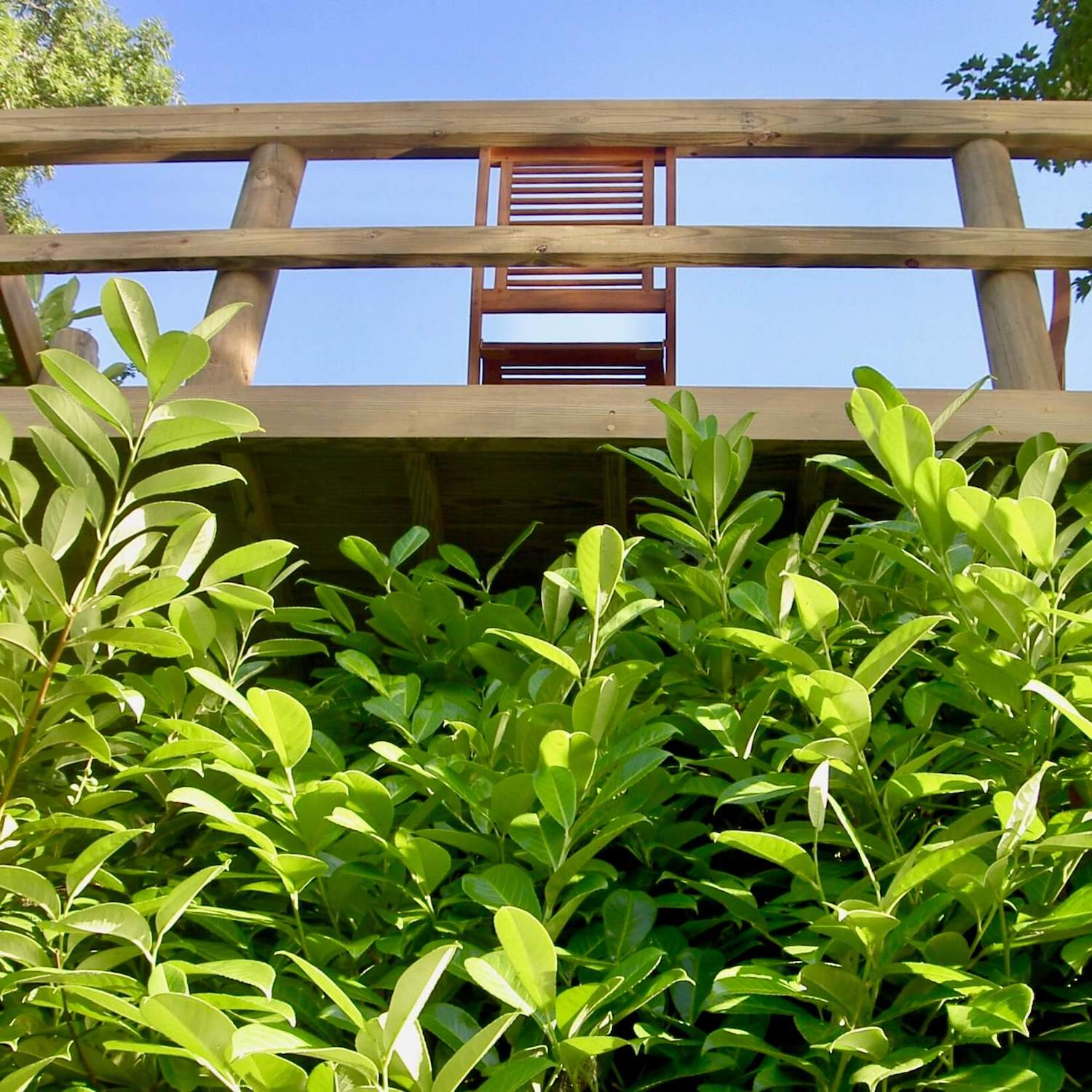 """""""...treehouse deck high above the river"""""""
