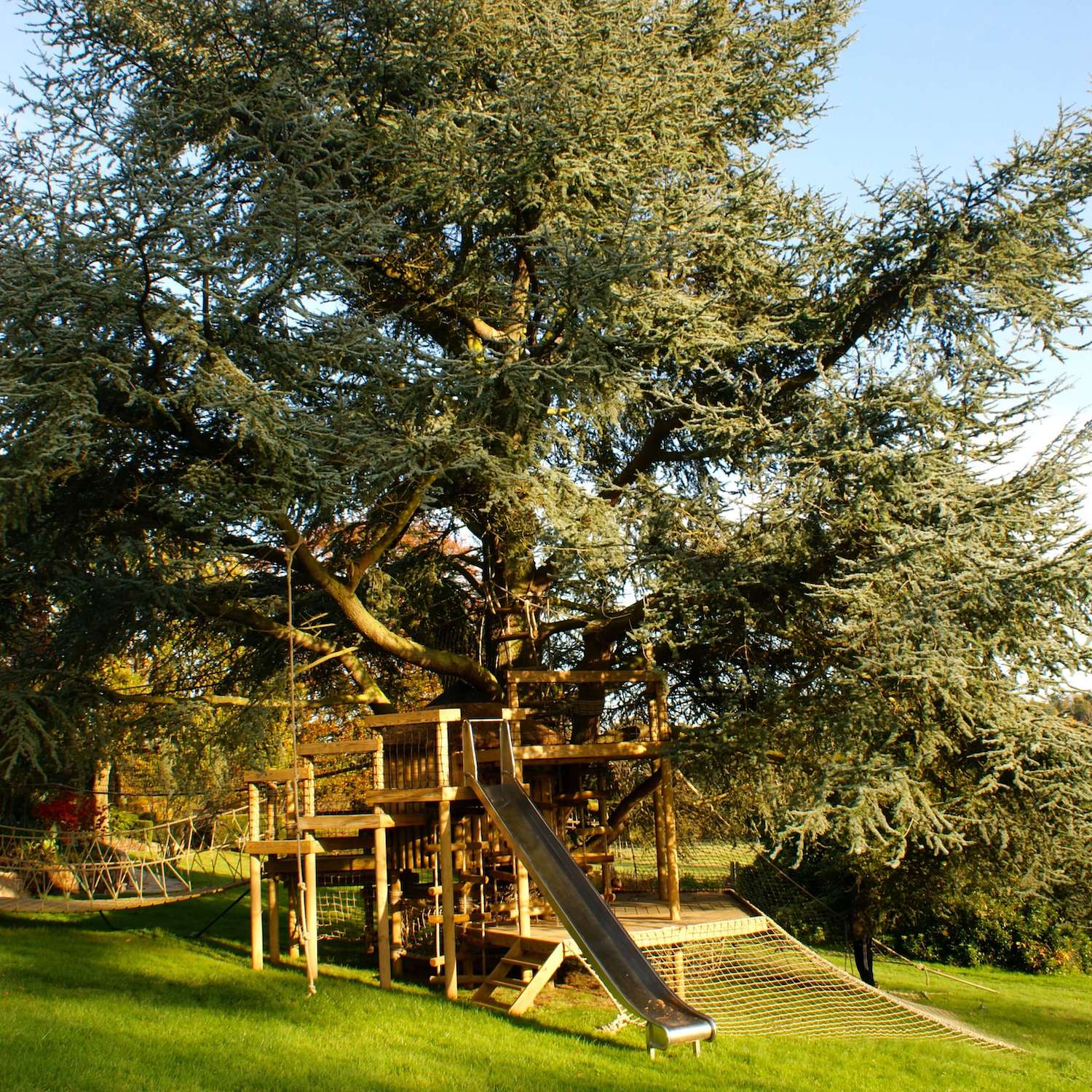 """...treehouse in Surrey wrapping a large blue cedar"""