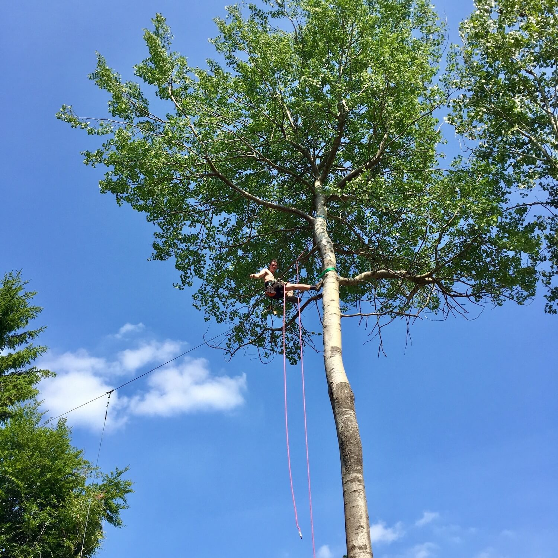 Installing a Nest Swing.jpeg