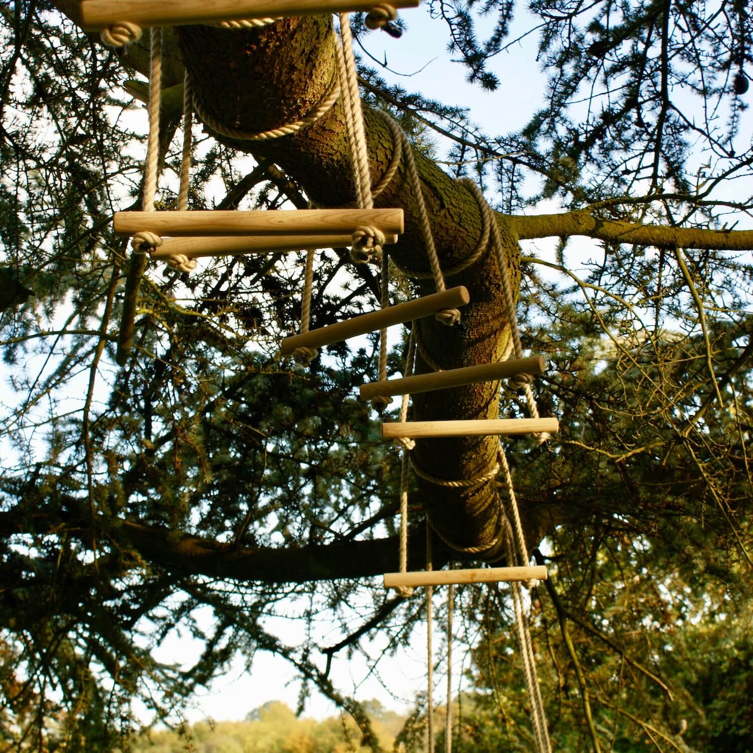 """...monkey bars hanging from a tree"""