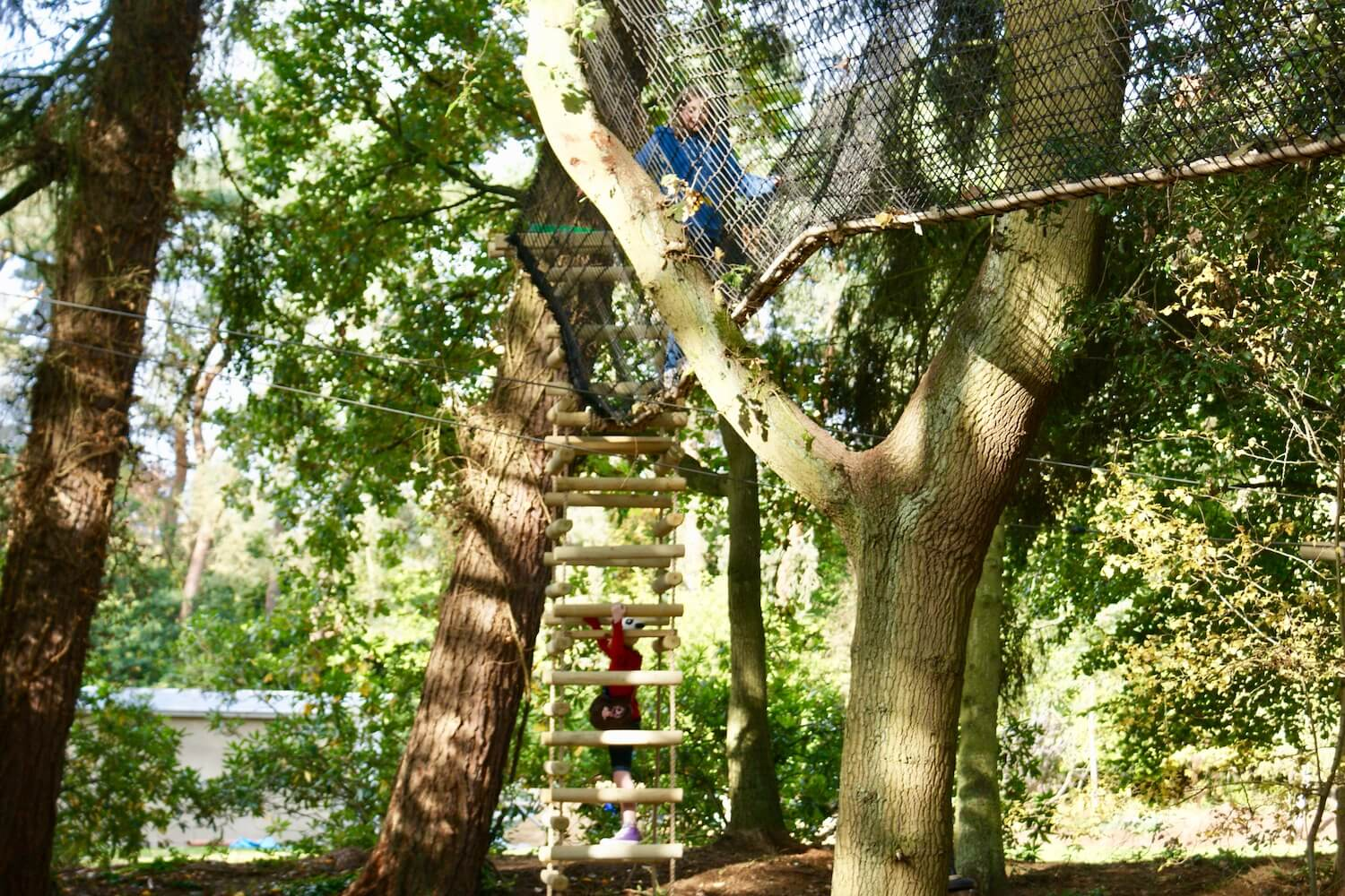 'Tree-Surfing' treehouses