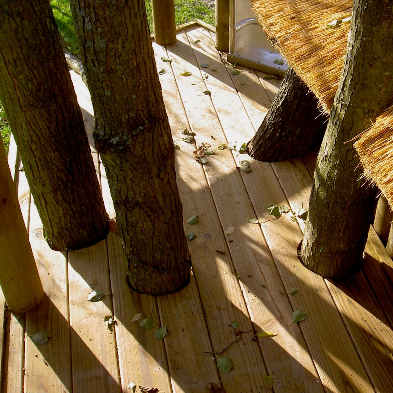 4 trees emerging through a treehouse deck