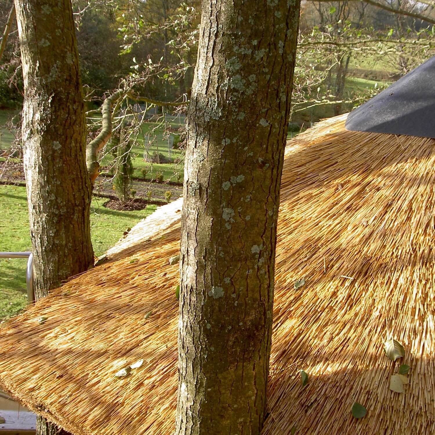 Trees coming through a thatched treehouse roof