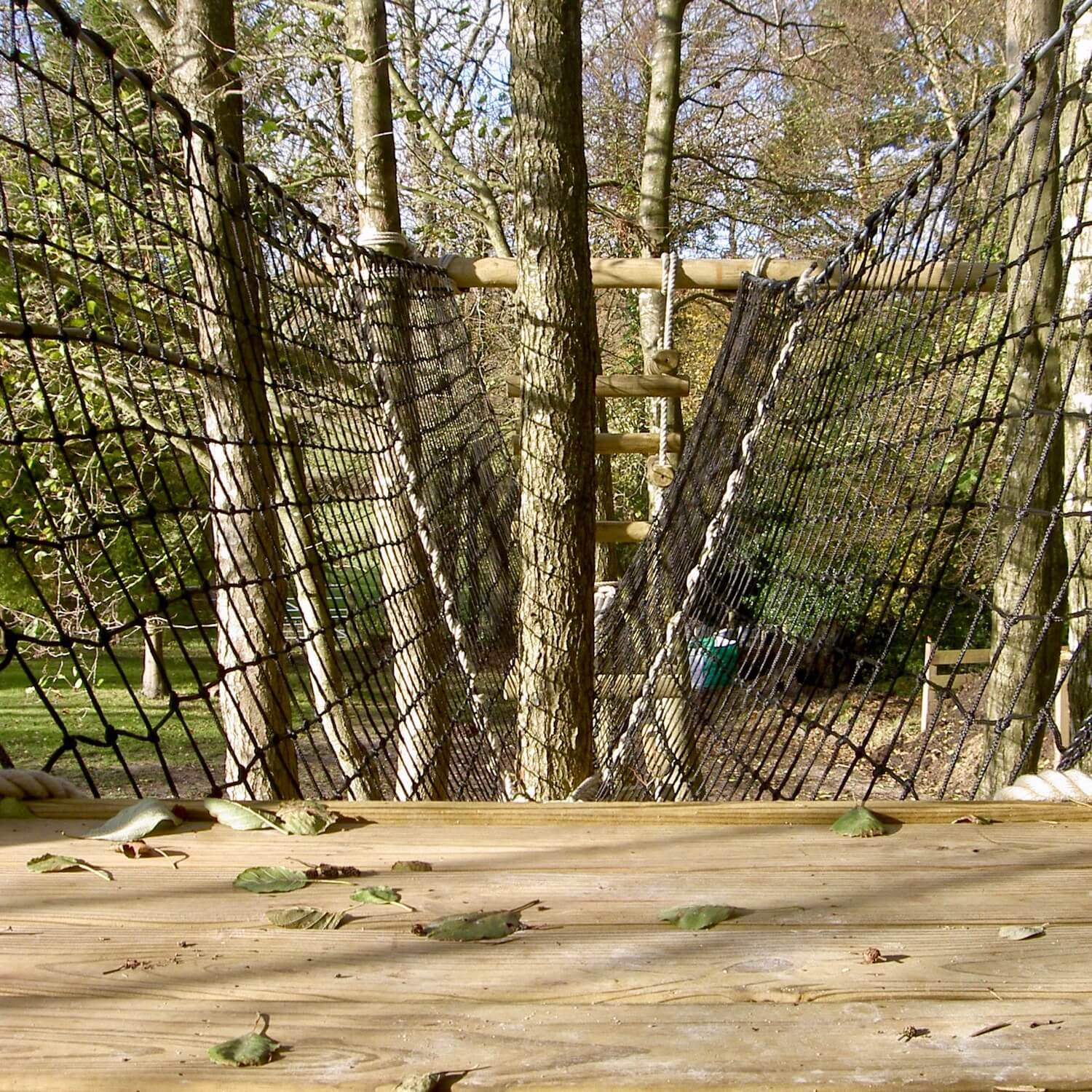 Treehouse platform leading to Treetop Walkway wrapping a tree