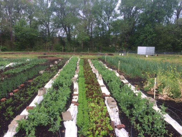 Fair Farms Now -
