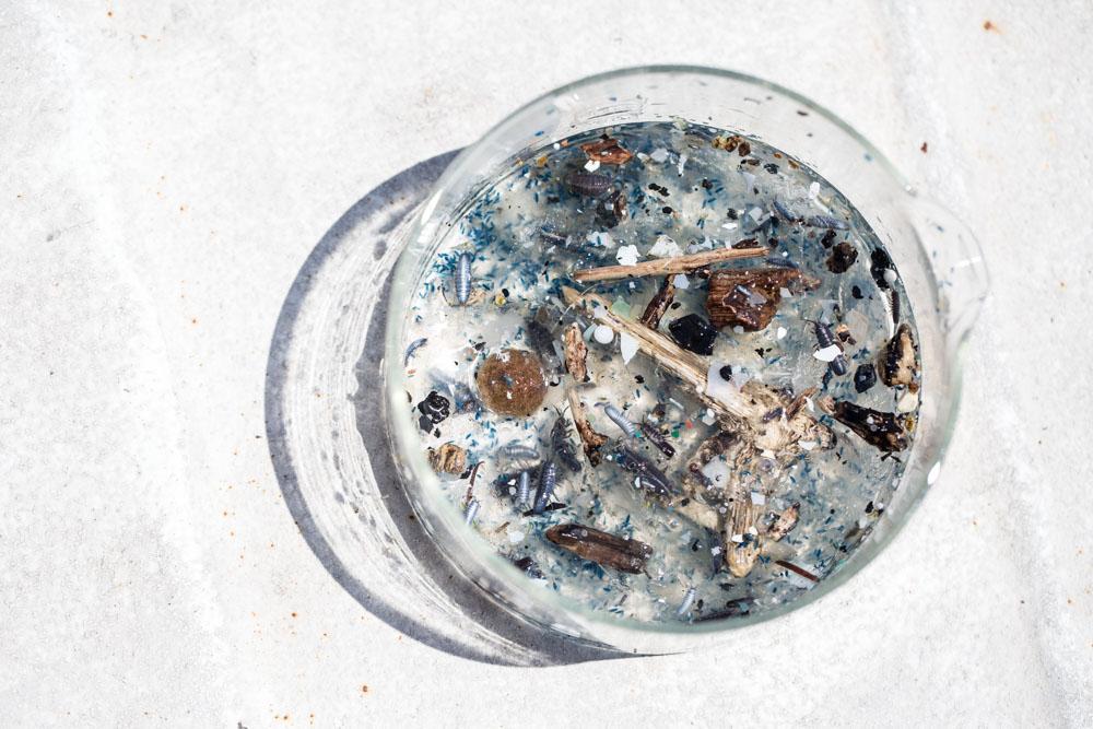 microplastic tara.jpg