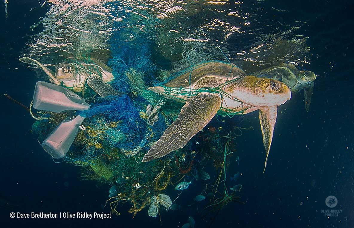 three-turtles-entangled-in-ghost-net-maldives-ORP-Dave-Bretherton.jpg