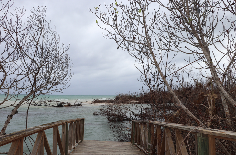 Lucayan National Park, land reclaimed completely by the sea. This walkway used to lead to an expansive white sand beach. A huge hit for the tourism industry. (Personal photo - Dr. Alana Dillette)