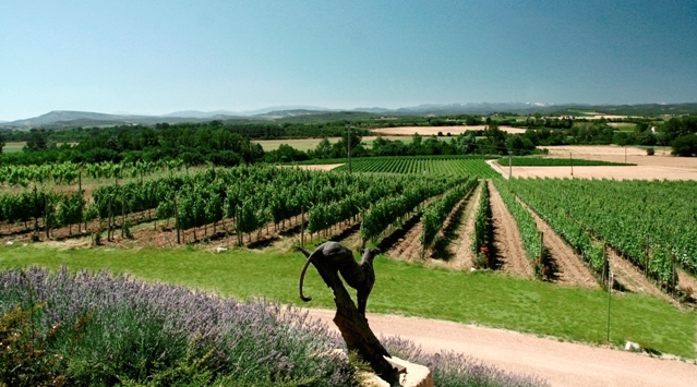 The vineyards at Domain Gayda. Credit:  www.gaydavineyards.com