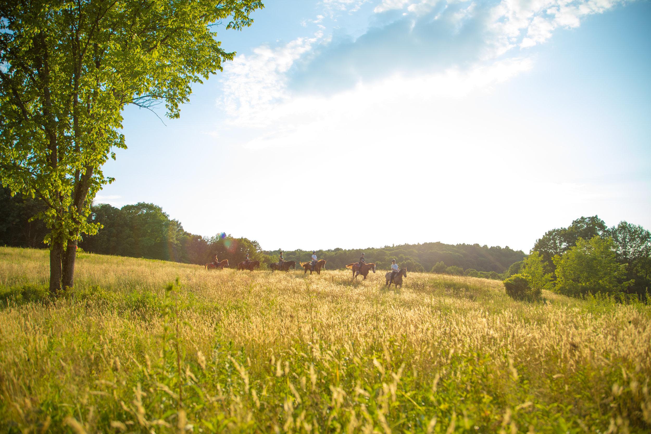 Horsesinfield.jpg