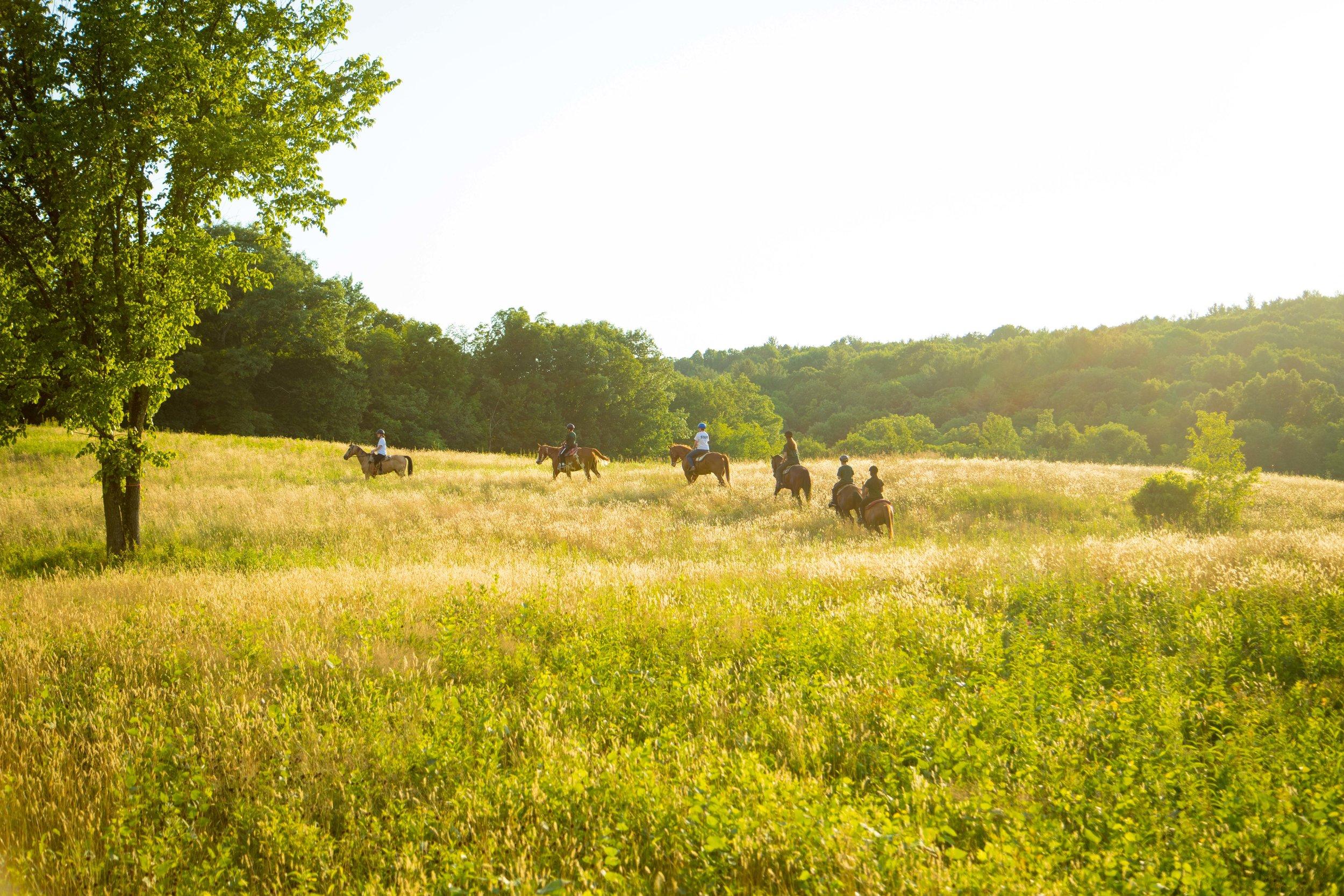 Horseback 3.jpg