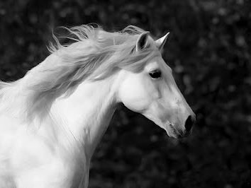 """""""Horses will always symbolize my spiritual journey—learning to trust God, facing my fears, and becoming wiser through my failures and struggles."""" - - Philip K. Hardin"""
