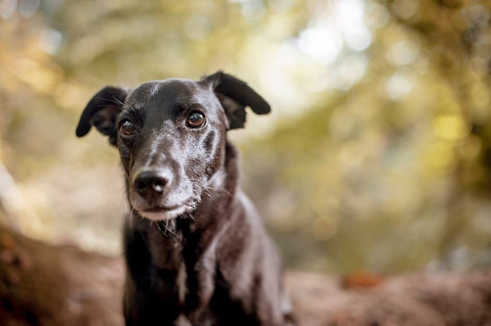 How holistic therapies can help your dog's arthritis - We all know that all dogs are different. They look different, sound different, behave different, the list could go on. And any illness, or emotional problem they have can also be different... Read more