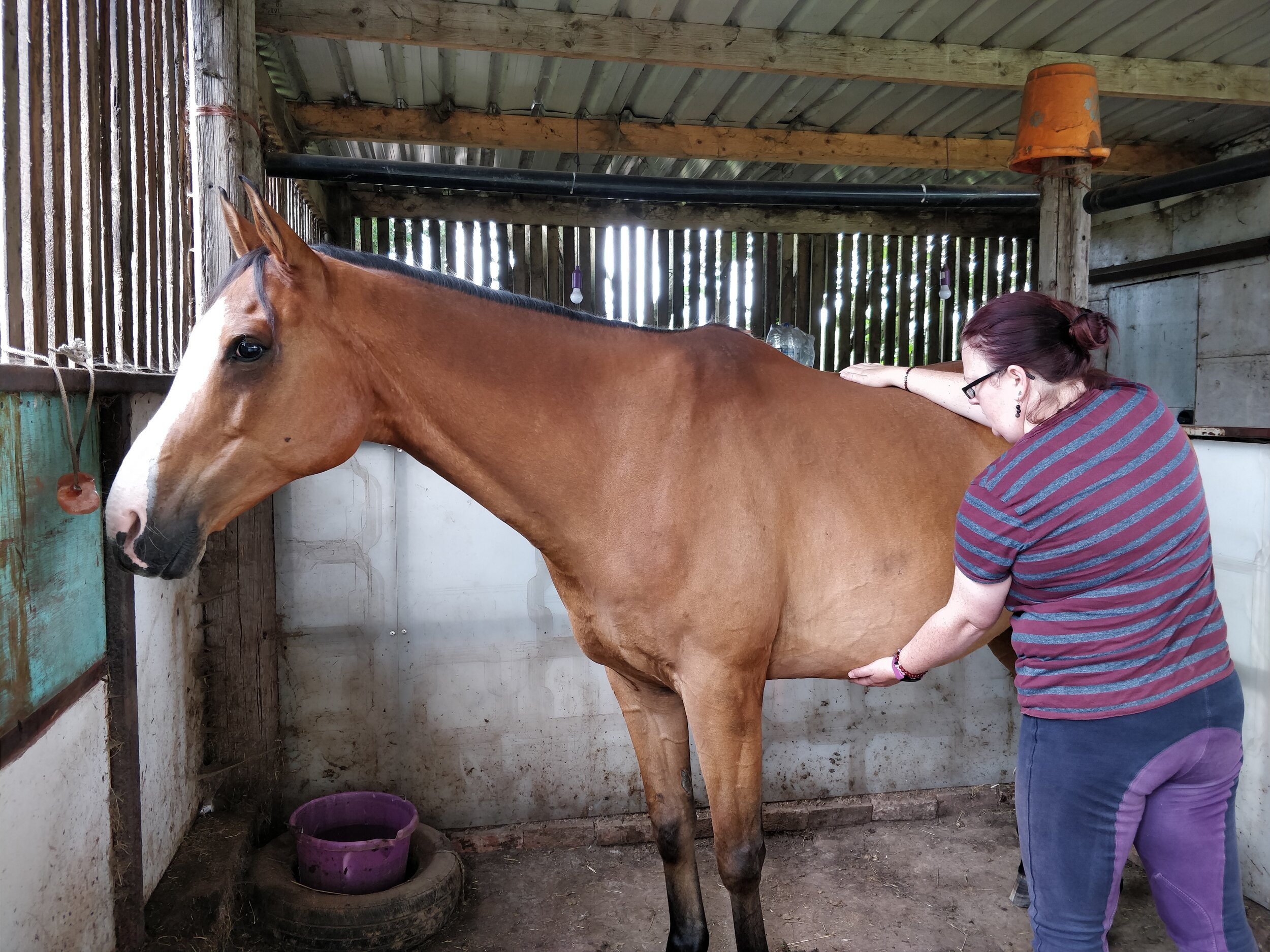 Releasing past trauma in horses the natural way, to reduce anxiety - I feel like I have been neglecting horses recently on my blog, and as it's anxiety month at Hoof To Tail Healing, lets talk anxiety. Read more…