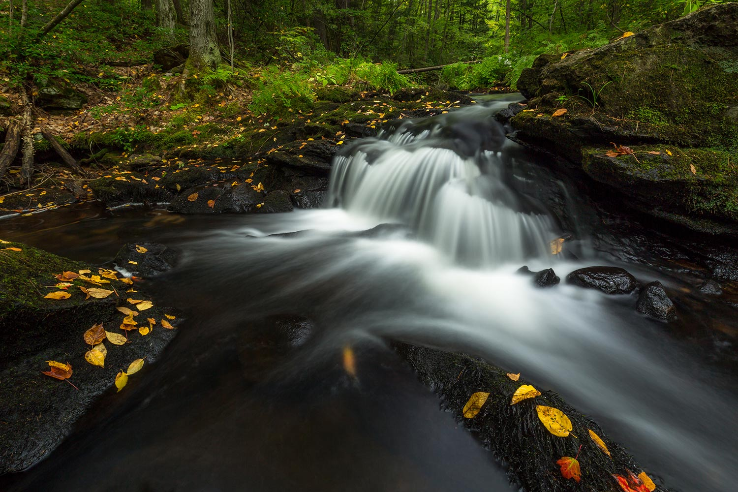 Early fall and a rushing Cold Brook.