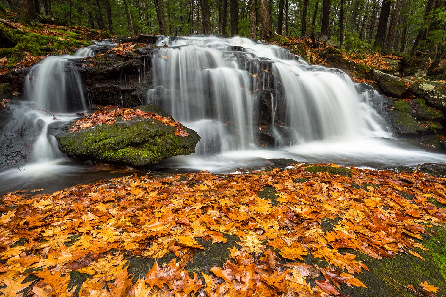 Resting leaves of late fall, Tucker Falls.