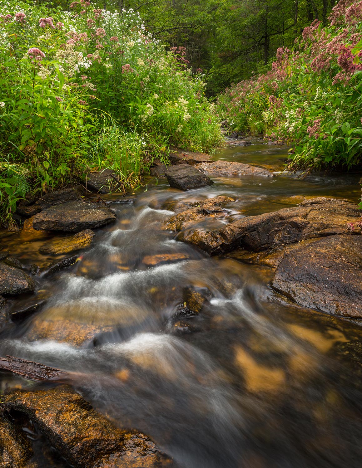 Cold Brook surrounded by wild flowers.