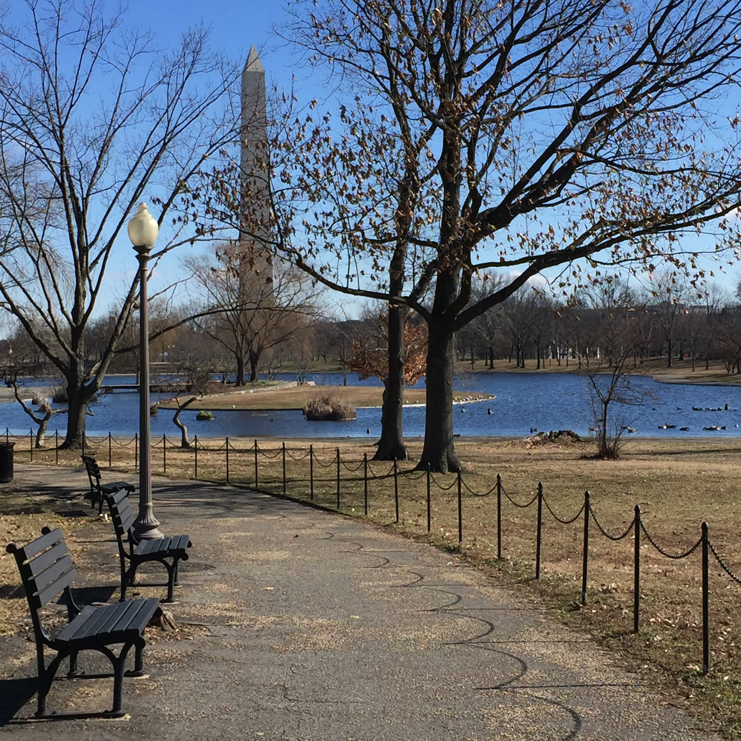 Washington, DC: a freezing cold day in January, 2016... before starting this blog in March, 2016