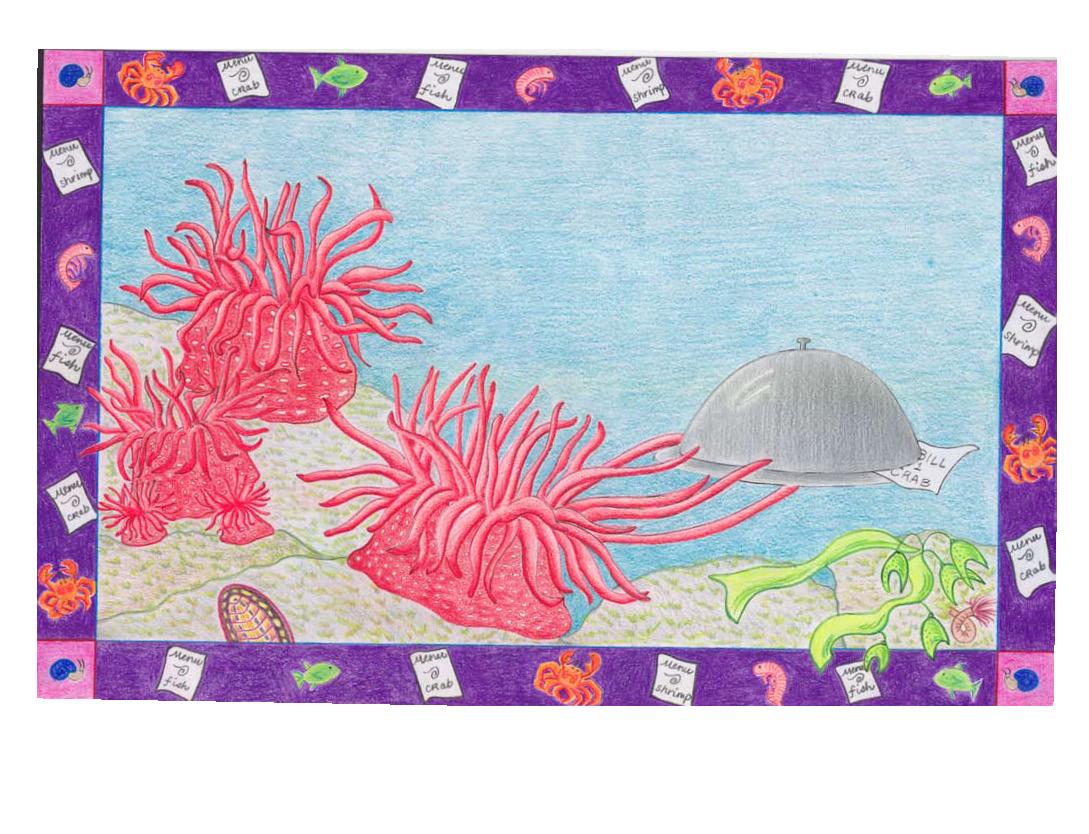 see me, anemone color pencil draft.jpg