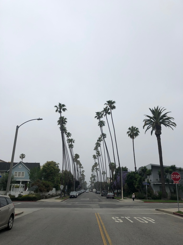Swapped the Redwoods for some Palm Trees