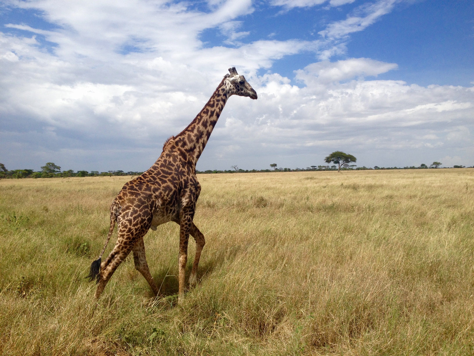 Photo taken by a student in Tanzania!