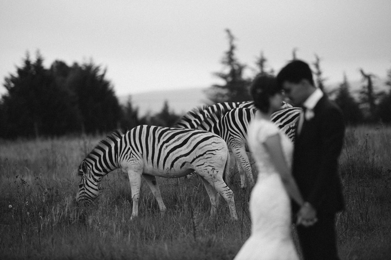 Jena & Taraz - Zebras-1.jpg