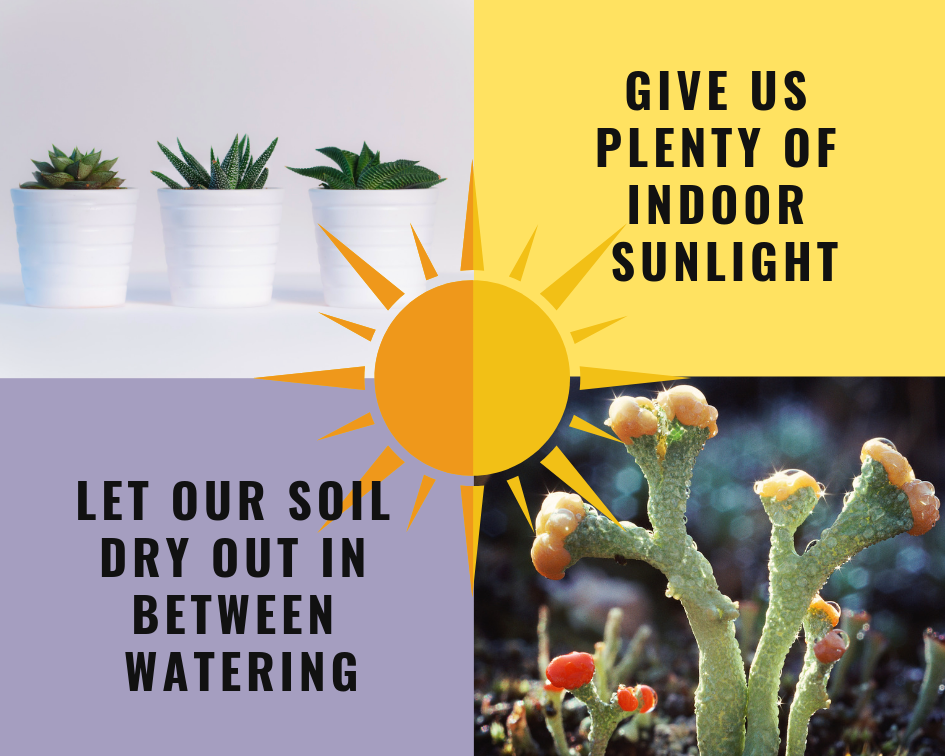 Let soil dry out in between watering (1).png