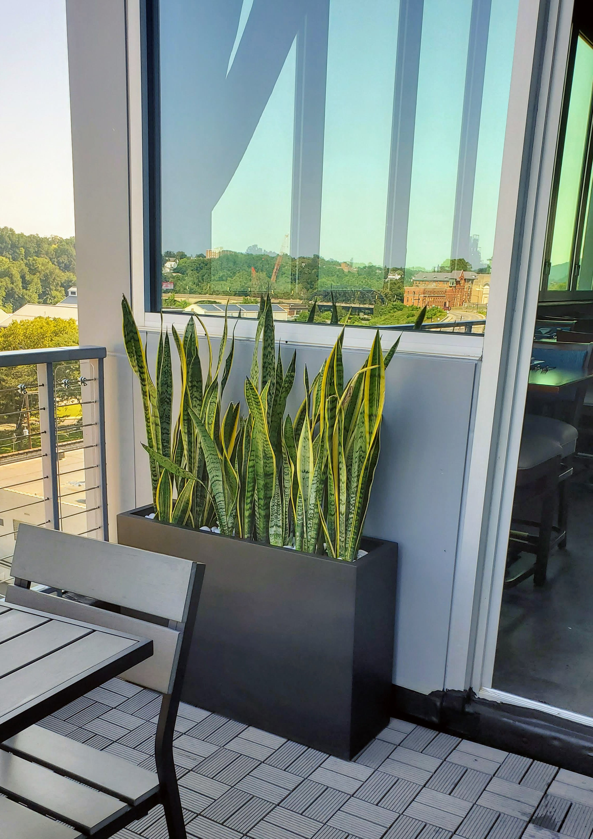 Vibrant plants from Mission Plant Company are the perfect accent to the open air terrace of this top notch Southside Bethlehem rooftop restaurant at  ZEST Bar & Grille.