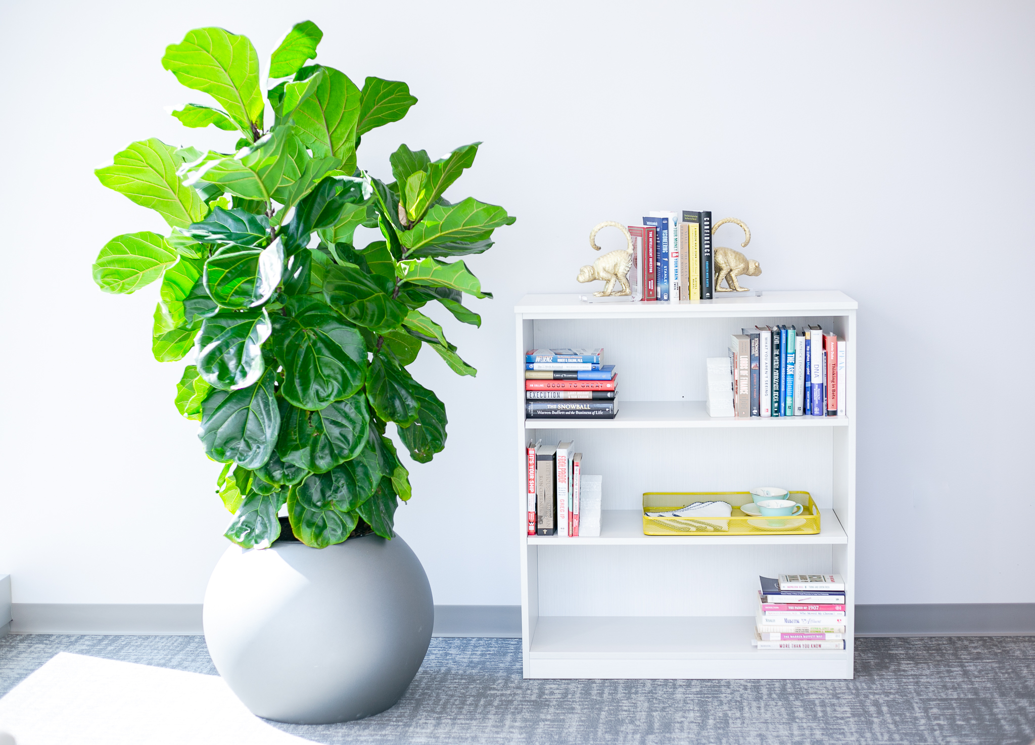 Fiddle Leaf Side View.jpg