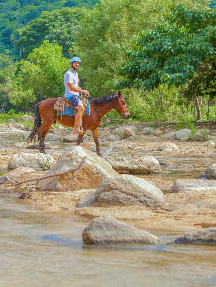 Nature Safari - horse.jpg