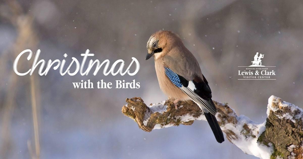 Christmas with the Birds.jpg