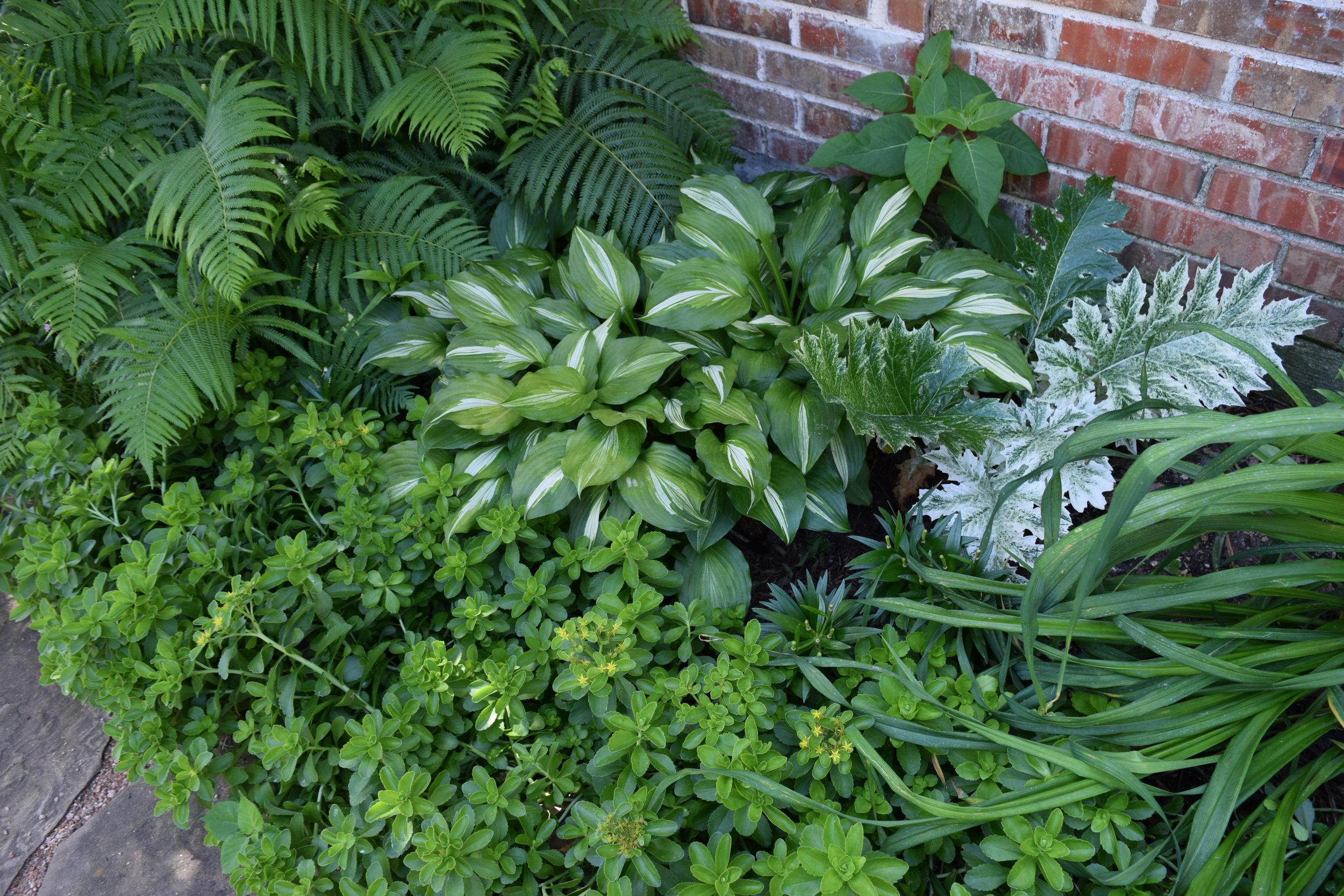 Garden Teagarden Garden use.JPG