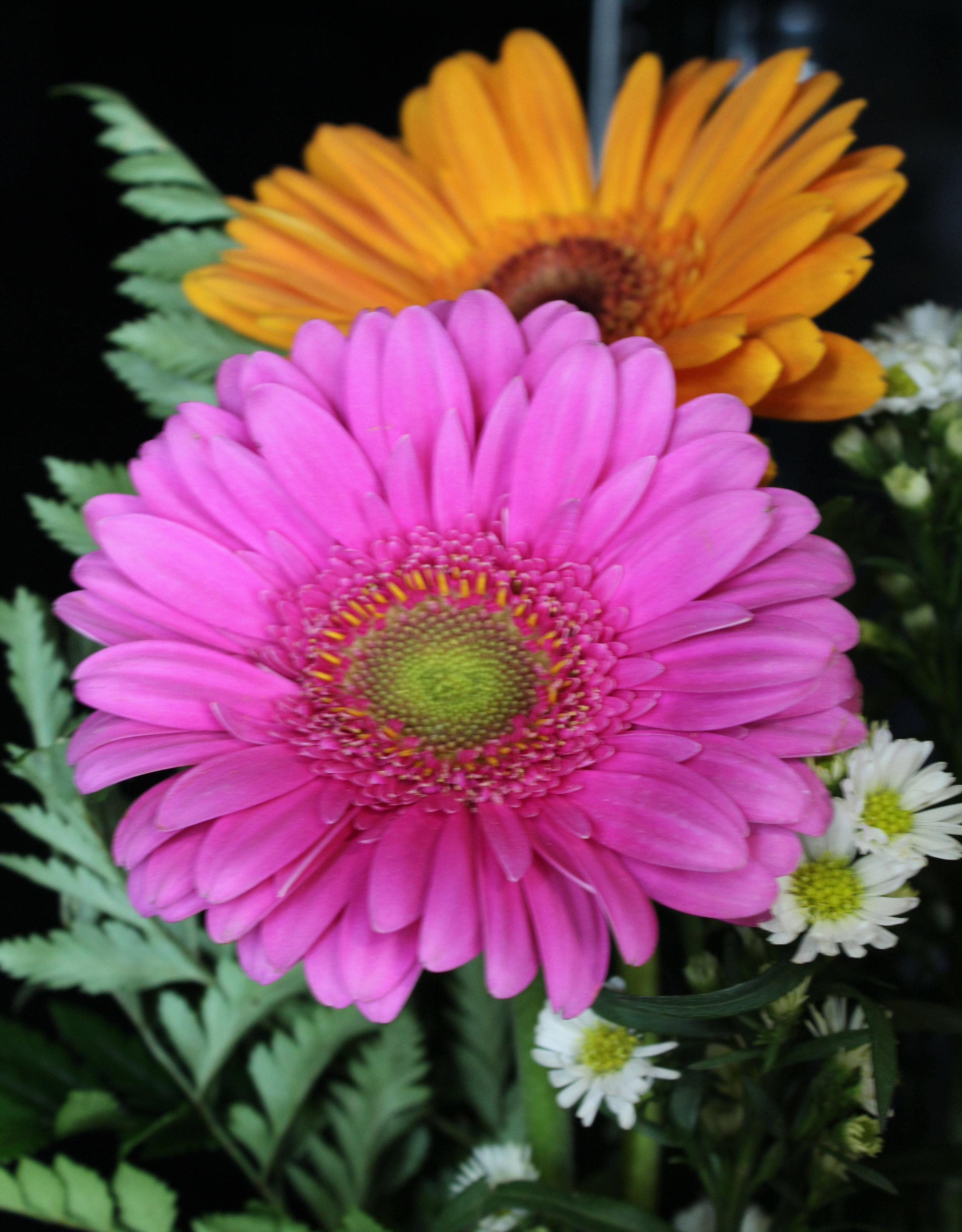 lovejoy flowers flower b.jpg