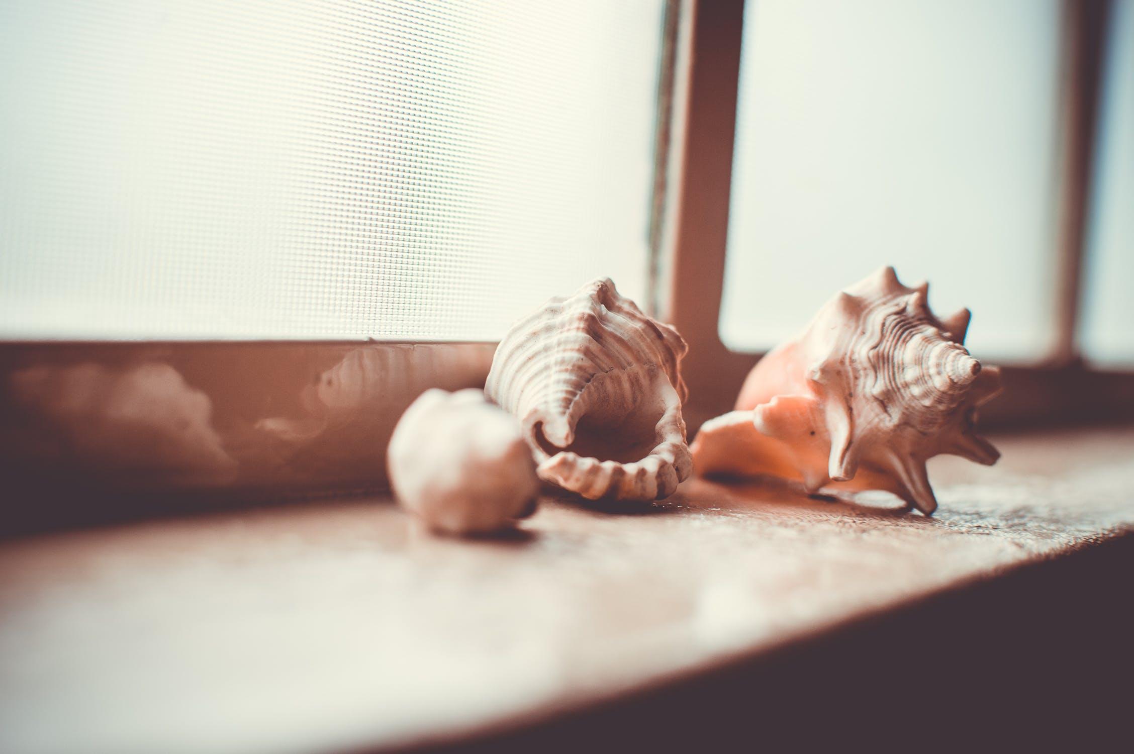 shells3.jpeg