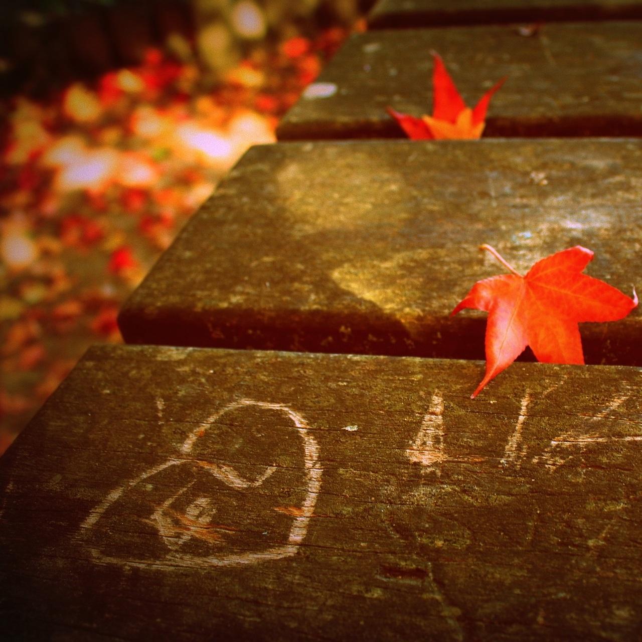 fall-4069797_1920.jpg