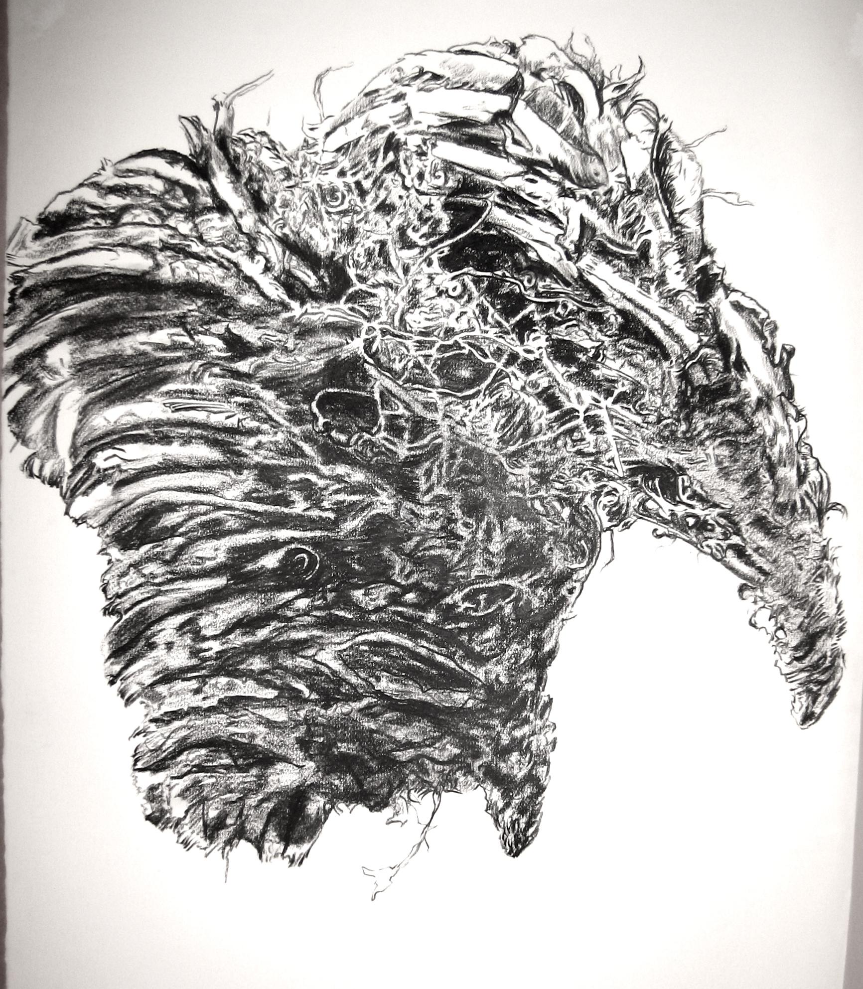 Raven Bundle 1