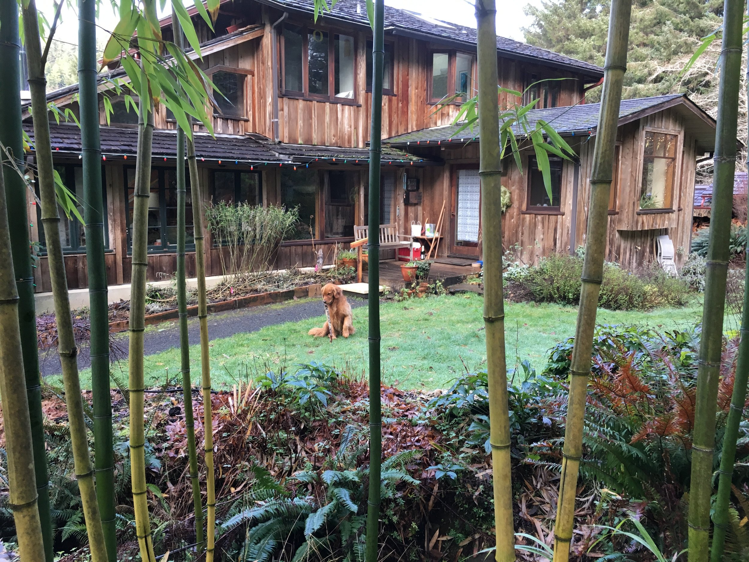 House Through the Bamboo