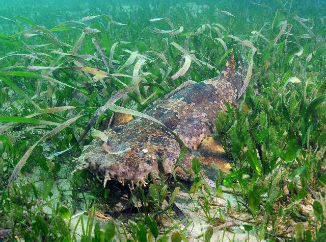 seagrass02.jpg