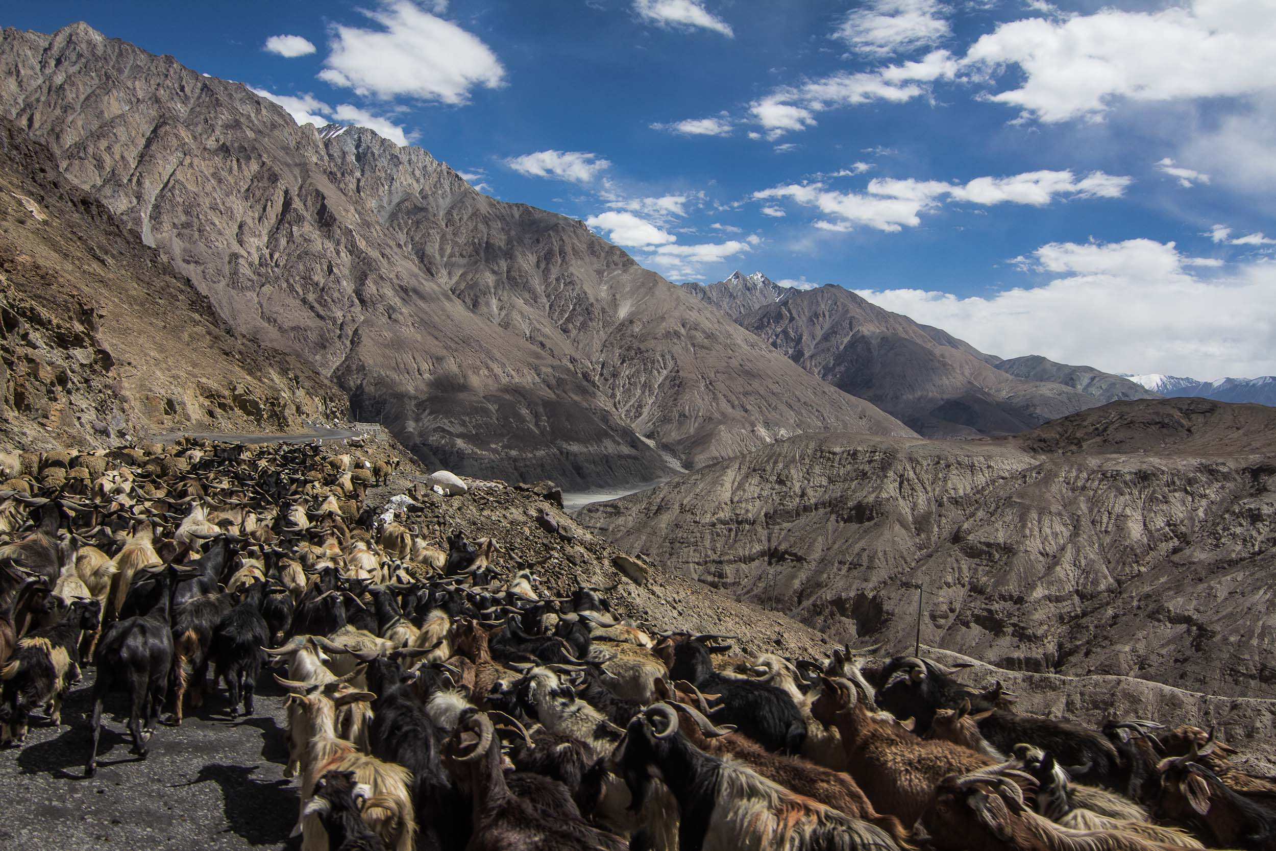 Sindhur_Photography_Travel_Landscape_Ladakh-10.JPG