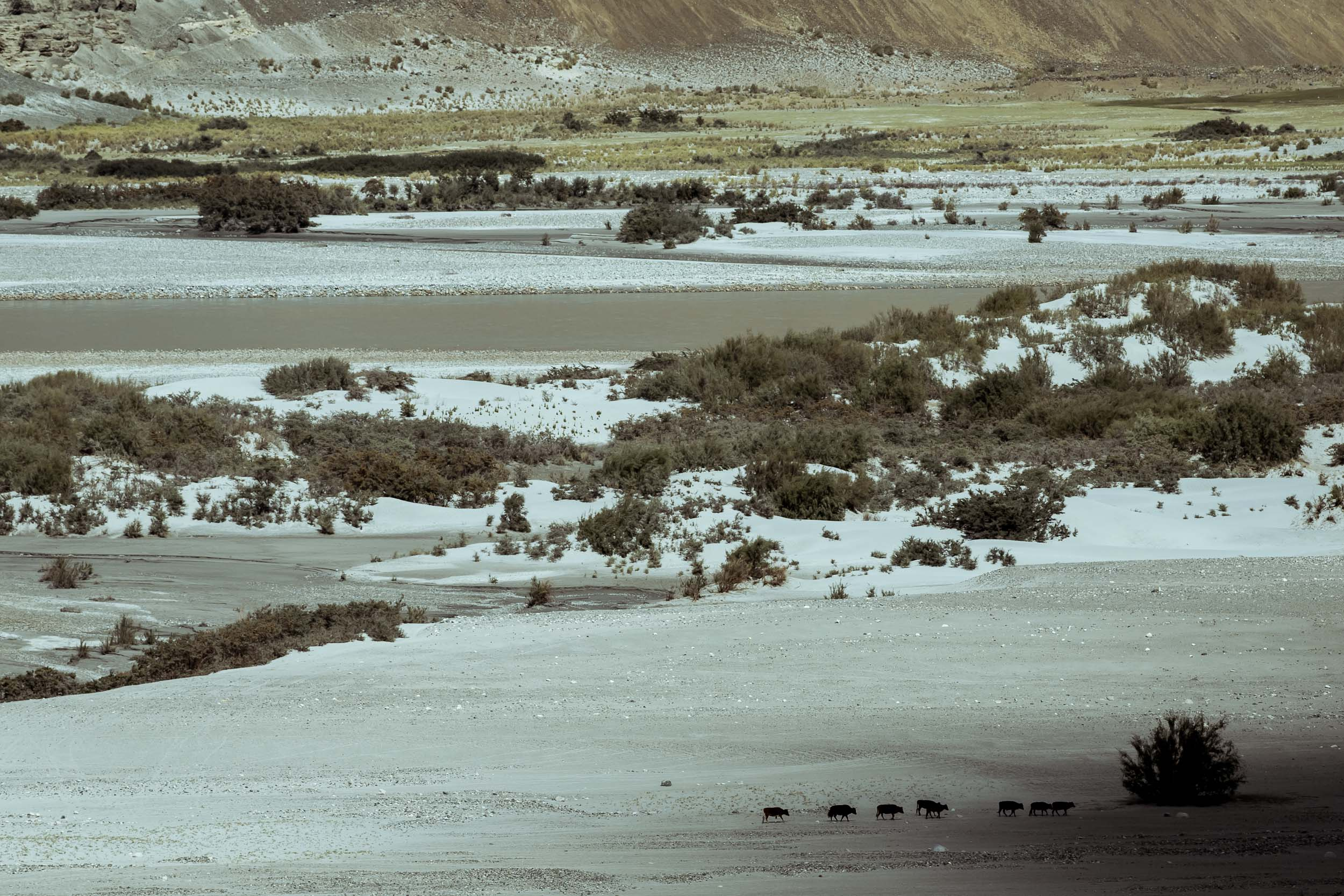 Sindhur_Photography_Travel_Landscape_Ladakh-8.JPG
