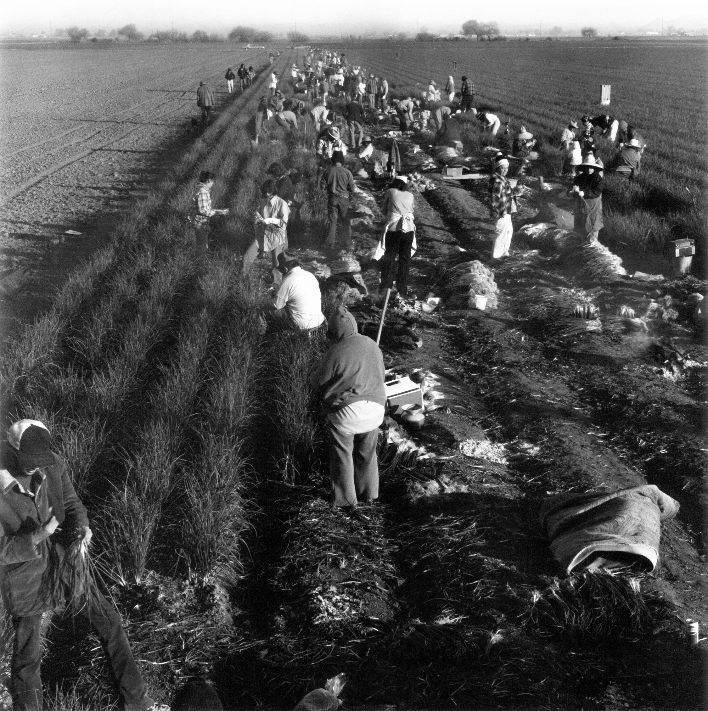 KL-FarmWorkers1-crop.jpg